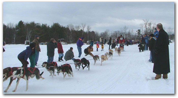 Laconia Sled Dog Race