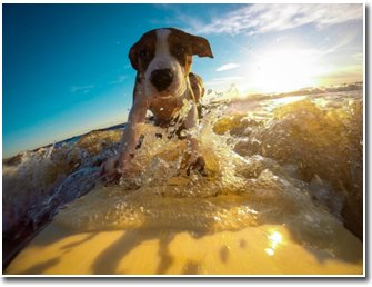 Pet Friendly Vacation Photo by Pixabay.